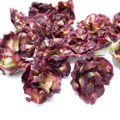 red lettuce single (12293_12)