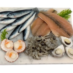 fish display board 2016-11-14-1281 (17031_13)