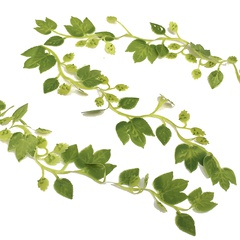 Image of <b>NEW:</b> Hop Bines